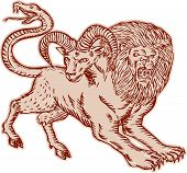 picture of snake-head  - Etching engraving handmade style Illustration of a Chimera Greek mythical creature with head of a lion and goat and tail that ended in a snake - JPG