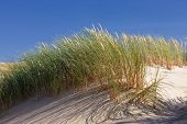 picture of dune grass  - Green grass in the dunes on a background of blue sky - JPG