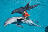 foto of dolphin  - Little Girl Swimming with two Dolphins in Swimming Pool - JPG