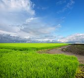 pic of cultivation  - Cultivated green meadow - JPG