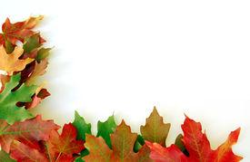 image of fall leaves  - fall colored leaves along border - JPG