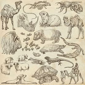 picture of freehand drawing  - ANIMALS around the World - JPG