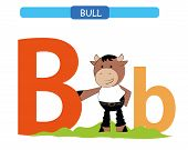 Letter B And Funny Cartoon Bull.  Animals Alphabet A-z. Cute Zoo Alphabet In Vector For Kids Learnin poster