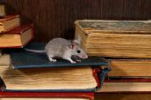 Close-up The Young Gray Mouse Stands On Pile Of Old Books In The Library. Concept Of Rodent Control. poster