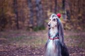 Dog, Afghan Hound With A Flower In A Hair And Beads, Is Stylish And Fashionable. Dog Fashion Concept poster