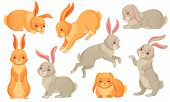 Cartoon Bunny. Rabbits Pets, Easter Bunnies And Plush Little Spring Rabbit Pet Isolated Vector Illus poster