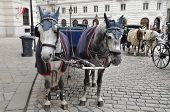 picture of pavestone  - Spotted black and white horses and carriage on square are waiting for passengers - JPG