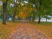 foto of fall leaves  - A leave covered walkway in Washington Crossing State Park along the Delaware River in Pennsylvania - JPG
