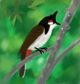 foto of bulbul  - Drawing of Bird bulbul tropical red whiskered - JPG