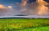 image of cade  - Fog at sunrise Cade - JPG