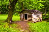 picture of cade  - Tree and small log cabin at Cade - JPG