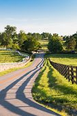 pic of wooden horse  - Country road surrounded the horse farms with evening fence shadows - JPG