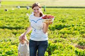 image of strawberry blonde  - mother and her little kid child on organic strawberry farm in summer picking berries - JPG