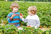 stock photo of strawberry blonde  - Two little friends having fun on strawberry farm in summer - JPG