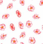 picture of wild-brier  - Beautiful watercolor seamless pattern with tender pink brier flowers on the white background - JPG