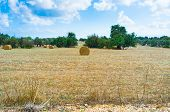 pic of neo  - The bales of straw on the meadow next to Neo Chorio village Cyprus - JPG