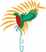 stock photo of bird paradise  - Bird of paradise vector illustration travel design icon - JPG