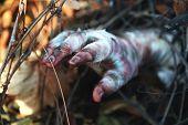 foto of mummy  - Hand of mummy outdoors - JPG