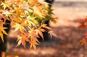 foto of seoraksan  - Maple and bokeh in autumn at Seoraksan National Park South Korea - JPG