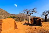 pic of baobab  - House surrounded by baobab trees in Africa Tanzania - JPG