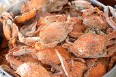 picture of steam  - Fresh Steamed crab in the steaming pot - JPG