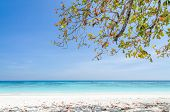 pic of crystal clear  - Crystal clear sea and white sand beach at Tachai island Andaman Thailand - JPG