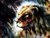 pic of lions-head  - beautiful painting of a lion head with a majesticaly peaceful expression profile portrait - JPG
