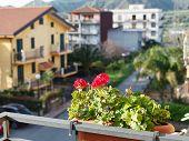 pic of geranium  - decorative flower geranium in pot on balcony of urban house in town Gaggi Sicily Italy - JPG
