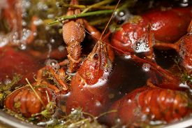 foto of boil  - Red boiled crayfish with dill in the pan - JPG