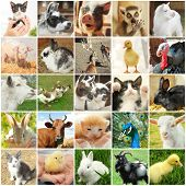 Collage with different cute animals poster