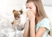 Young ill woman with tissue and pet on background. Concept of allergies to dogs poster