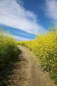 Hiking Trail. Super bloom. California wild flower super bloom. California hills with wild flowers bl poster