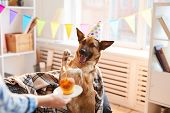 Portrait Of Unrecognizable Woman Giving Birthday Cake To Dog, Copy Space poster