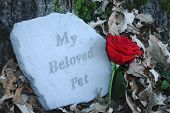 Beloved Pet Memorial Stone With Red Rose poster