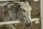 Donkey In The Fence poster
