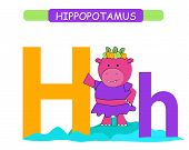 Letter H And Funny Cartoon Hippopotamus. Animals Alphabet A-z. Cute Zoo Alphabet In Vector For Kids  poster