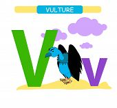 Letter V And Funny Cartoon Vulture. Animals Alphabet A-z. Cute Zoo Alphabet In Vector For Kids Learn poster
