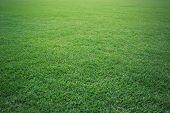 Green Grass Soccer Field Background Beautiful Pattern Of Fresh Green Grass For Football Sport, Footb poster