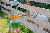 A Little Girl Is Feeding A White Goat On The Lawn A Sunny Summer, In A Country In Russia. Useful Goa poster
