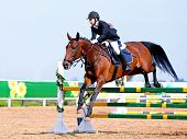picture of horse face  - Equestrian sport - JPG