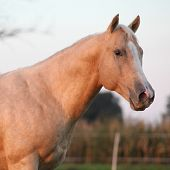 Nice Palomino Horse In Sunset