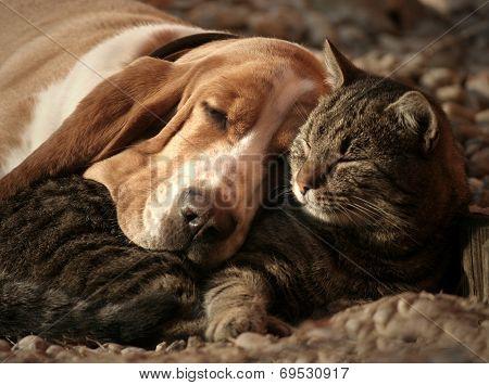 Cat pillow dog blanket poster