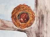 stock photo of crotch  - rolled up squirrel in a nest at a tree crotch holding winter sleep watercolor children painting - JPG