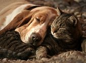 stock photo of sleeping  - Dogs and cats are resting together - JPG
