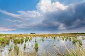 image of swamps  - rain clouds over swamp Fochteooerveen Friesland Netherlands - JPG