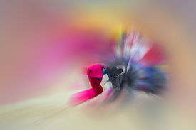 foto of bullfighting  - Colorful abstract drawing about bullfight with a bullfighter fighting with a bull - JPG