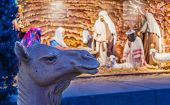 stock photo of nativity scene  - Unusual view of a nativity scene with a camels head in focus with blurred background of the stable and wise men - JPG
