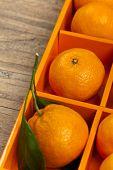 picture of clementine-orange  - Tangerines or Mandarin orange in the orange box - JPG