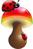 image of toadstools  - Two ladybugs climbing on toadstool illustration on white - JPG