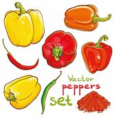 stock photo of pepper  - Vector illustration of peppers chili peppers cayenne and spice - JPG
